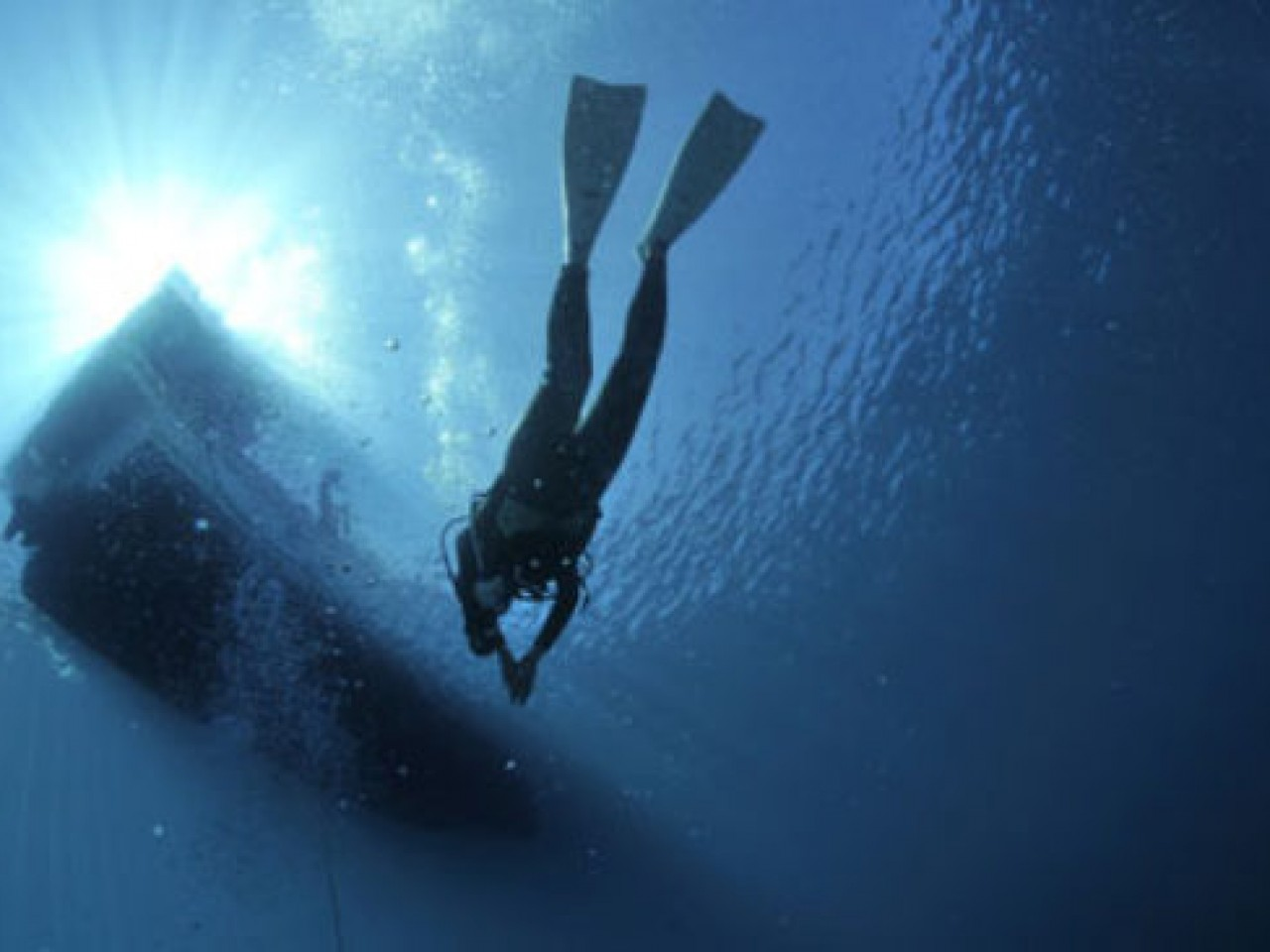 Diving immersioni nei fondali di Adriatico e Tirreno