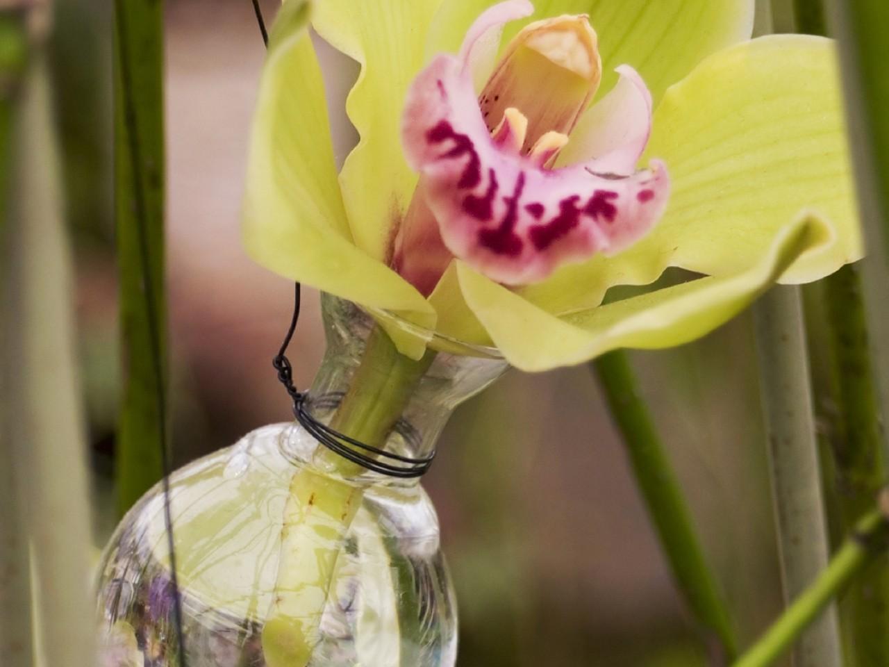 RHS Tatton Park Flower Show 2018